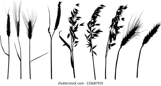 illustration with ear silhouettes collection isolated on white background