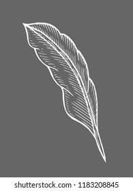 illustration of a feather quill pen in a vintage woodblock style