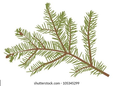 illustration with fir branch isolated on white background