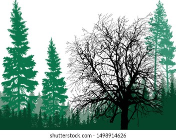 illustration with fir forest silhouettes isolated on white background