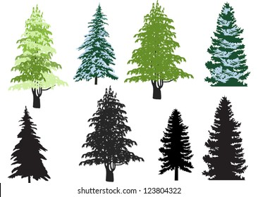 illustration with fir set isolated on white background