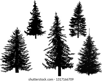 illustration with five fir silhouettes isolated on white background