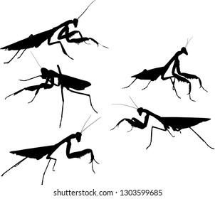 illustration with five mantids silhouettes isolated on white background