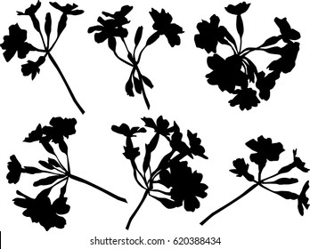 illustration with flowers silhouettes isolated on white background