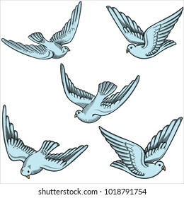 Illustration of flying doves in different positions.Hand drawn contoured pigeon. Hand drawn of flying doves with  isolated on white. Retro,vintage detailed image done in black line strokes