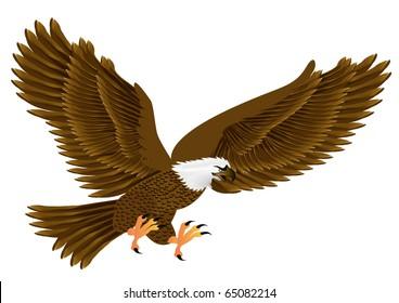 illustration flying eagle insulated on white background