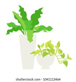 Illustration of a foliage plant.