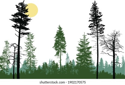 illustration with forest isolated on white background
