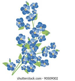 illustration of the forget-me-not flowers over white background
