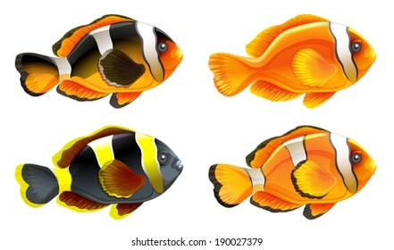 Illustration of the four colorful fishes on a white background