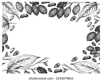 Illustration Frame of Hand Drawn Sketch of Almonds and Canarium Indicum, Galip Nuts or Pacific Almonds on White Background, Good Source of Dietary Fiber, Vitamins and Minerals.