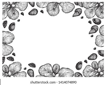 Illustration Frame of Hand Drawn Sketch of Almond Nuts and Terminalia Catappa or Malabar Almonds Fruits on White Background.