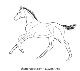 An illustration of a freely cantering foal.