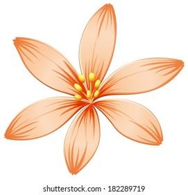 Illustration of a fresh five-petal orange flower on a white background