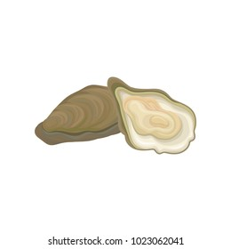Illustration of fresh oysters. Raw mollusk in shell. Seafood concept. Graphic design element for restaurant menu, advertising poster or flyer. Colored flat vector icon