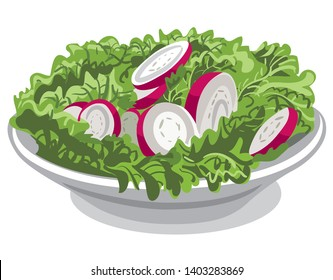 illustration of the fresh salad with radish and lettuce