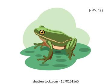 illustration of frog, flat vector design image.