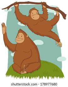 Illustration with funny orangutans