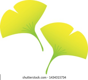 Illustration of ginkgo, typical autumn leaves