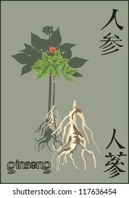 illustration with ginseng on dark background