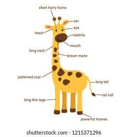 im�genes, fotos de stock y vectores sobre part giraffe shutterstock Origami Giraffe Diagrams