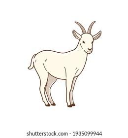 Illustration of goat. Simple flat vector illustration for emblem, badge, insignia.