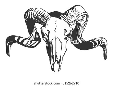 Illustration with goat skull.  Hand drawn. Vector.