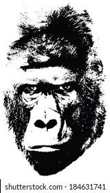 illustration of gorilla face on white background