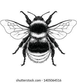Illustration of a Graden Bumblebee