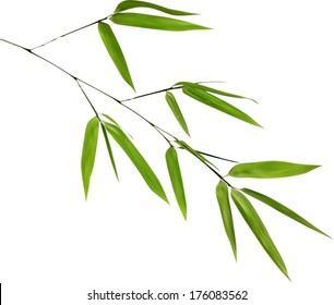 illustration with green bamboo branch isolated on white background