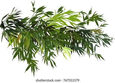 illustration with green bamboo branches isolated on white background
