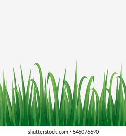 Illustration of green grass with white background.
