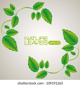 Illustration of green leaves isolated on white background, vector illustration