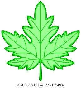 Illustration of the green maple leaf