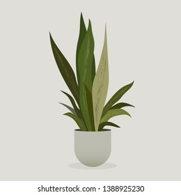 Illustration of green plant in a pot . Sansevieria Plant . Snake Plant