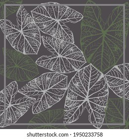 illustration of green and white taro leaves