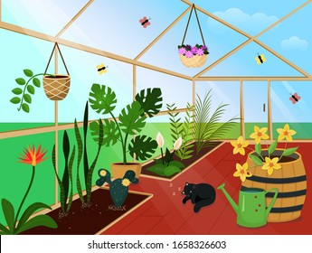 Illustration. Greenhouse with flowers, Sunny weather, sleeping cat. Stock vector graphics.