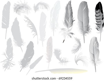 illustration with grey feathers isolated on white background