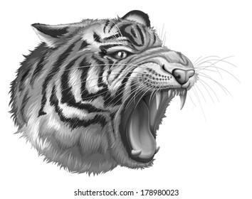 Illustration of a grey tiger roaring on a white background