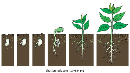 Illustration of growing plant