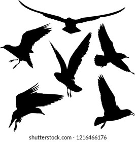 illustration with gull silhouette collection on white background