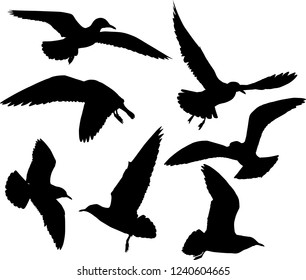 illustration with gull silhouettes collection isolated on white background