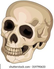 Illustration of Halloween skull