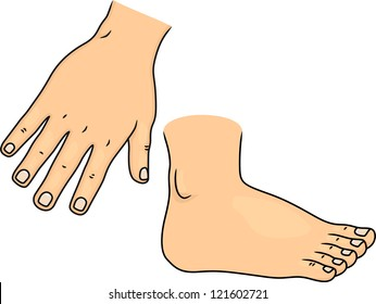 Illustration of Hand and Foot Body Parts