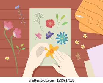 Illustration of Hands Holding and Pressing Flowers on a Paper for a Herbarium