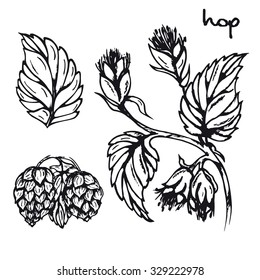 Illustration of healing herbs. Hop black and white vector isolated. Sketch hop medicinal plant. Hand drawn illustration for print, decoration, image, design, label