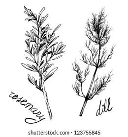 illustration of herbs