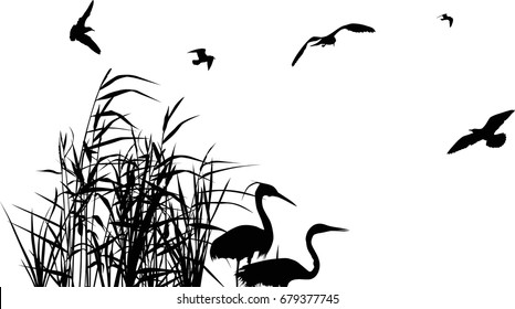 illustration with heron between reed silhouettes isolated on white background