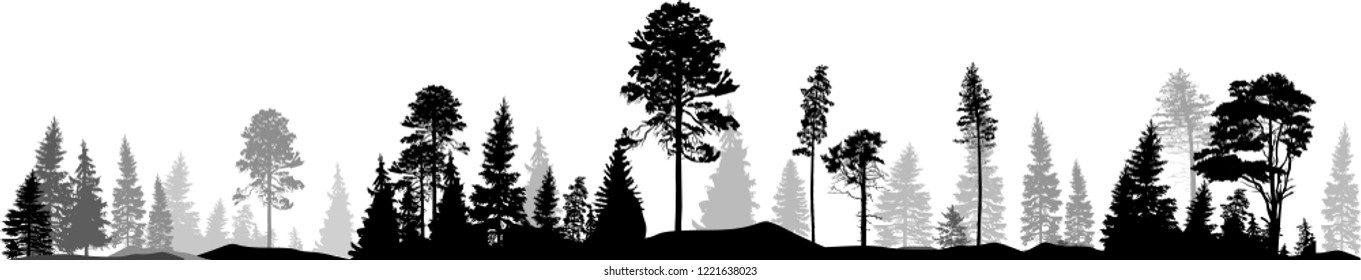 illustration with high pine in fir trees forest isolated on white background