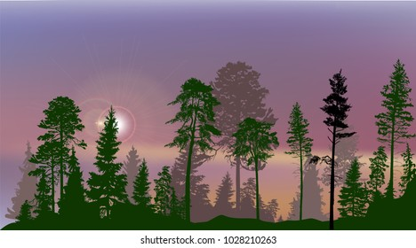 illustration with high pines in fir trees forest on lilac sky background